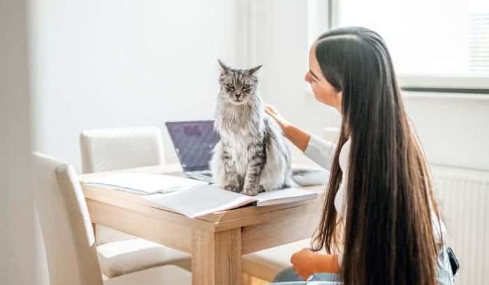 cat-tail-speak