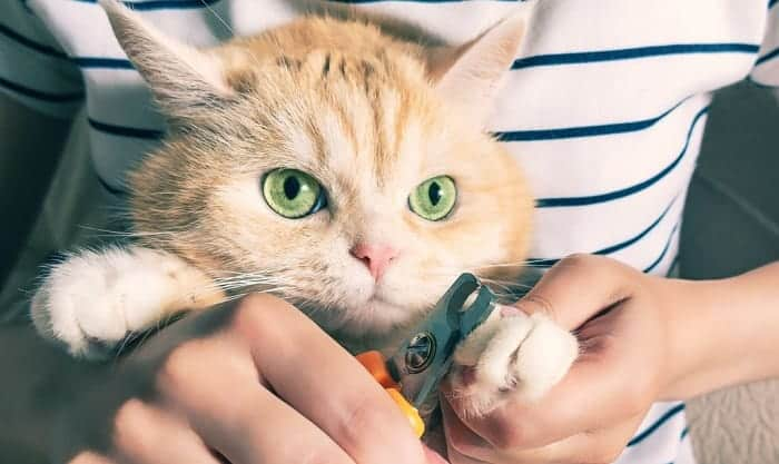 cost-to-declaw-a-kitten