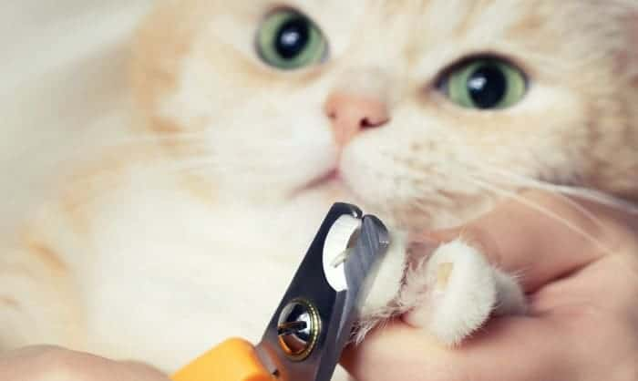 cost-to-get-a-cat-declawed
