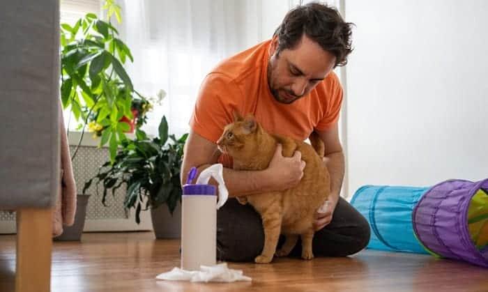 proper-way-to-pick-up-a-cat