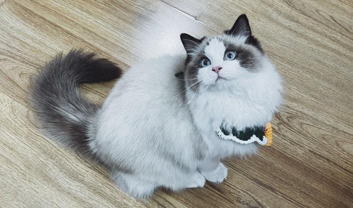 cat-pooped-on-floor