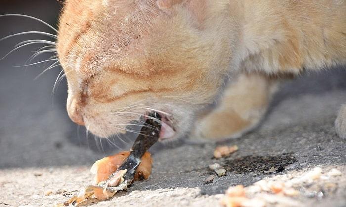 cat-regurgitating-undigested-food
