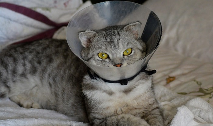 how much does it cost to spay or neuter a cat