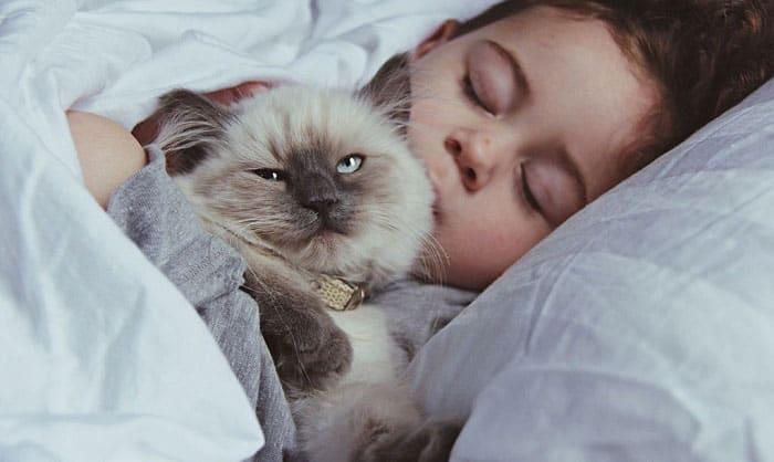 kitten-sleep-on-my-neck