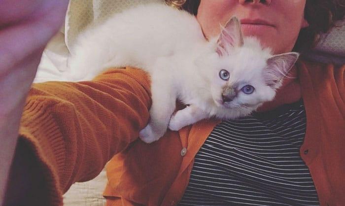 my-cat-nuzzle-my-neck