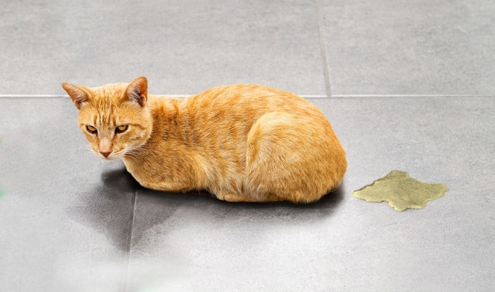 why is my cat pooping on the floor